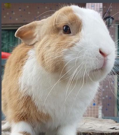 【小兔猼(图)】百科知识点